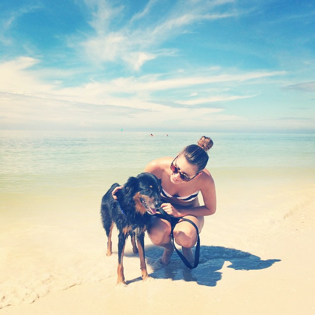 pet beach essentials